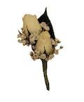 White Spray Rose Boutonniere