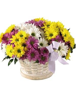Beautiful spring daisies!