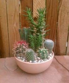 Cactus Garden - Large