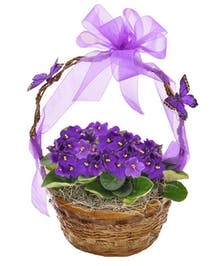 The beauty of African violets.