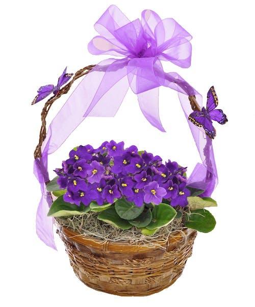 Violet Basket
