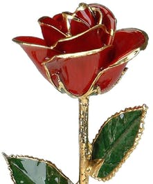Red Rose Trimmed in Gold