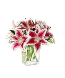 Fragrant stargazer lilies