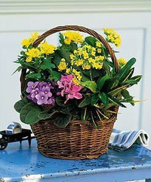 A petite basket packed with beauty.